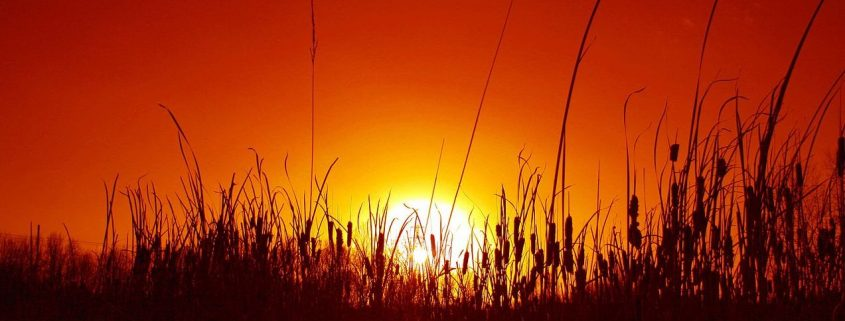 Burning Sun by law keven
