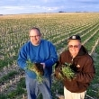 Todd and Arliss Nielsen inspect their ryegrass cover crop in Wright County, Iowa. USDA photo.