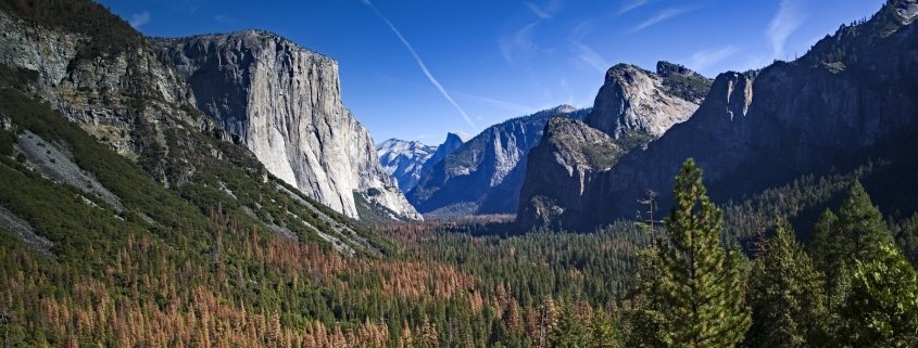 Tunnel View of Yosemite and bark beetle infestation damage. October 2016 by Aleta Rodriguez.
