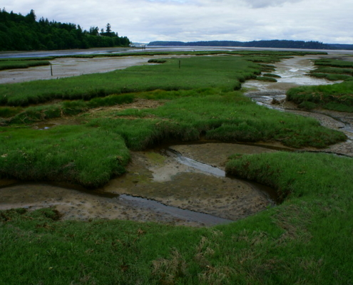 Tidal marsh by David Pattte US Fish and Wildlife Service